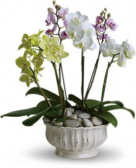 Image of Flowers or flower product titled Regal Orchids