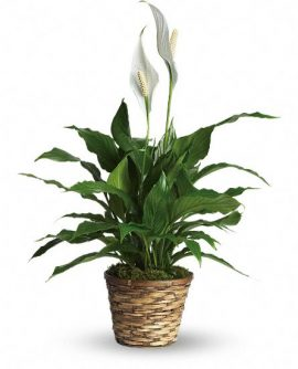 Image of Flowers or flower product titled Stylish Plant Assortment