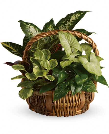 Image of Flowers or flower product titled Emerald Garden Basket