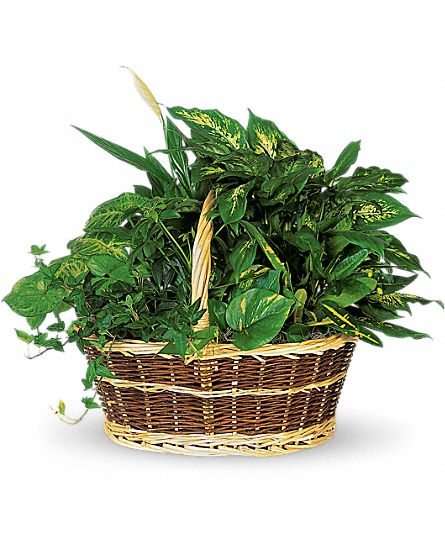 Image of Flowers or flower product titled Large Basket Garden