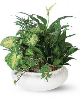 Image of Flowers or flower product titled Medium Dish Garden