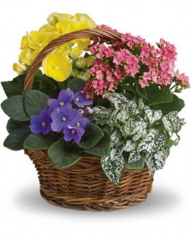 Image of Flowers or flower product titled Spring Has Sprung Mixed Basket