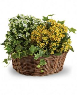Image of Flowers or flower product titled Basket of Joy