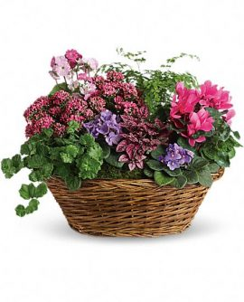 Image of Flowers or flower product titled Simply Chic Mixed Plant Basket