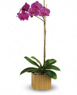 Image of Flowers or flower product titled Imperial Purple Orchid