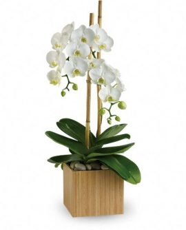Image of Flowers or flower product titled Opulent Orchids