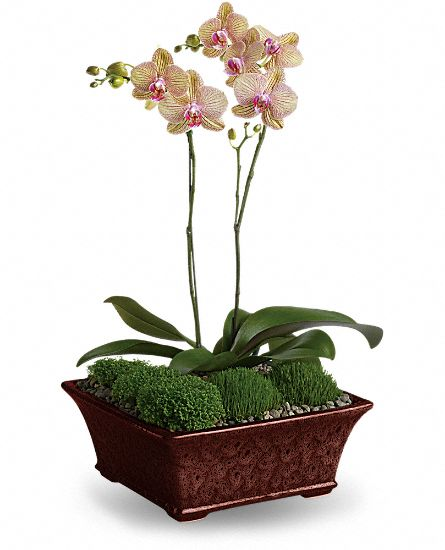 Image of Flowers or flower product titled Divine Orchid