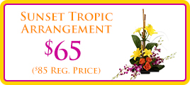 Sunset Tropic Promo