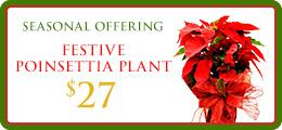 Festive Poinsettia Flower Promo